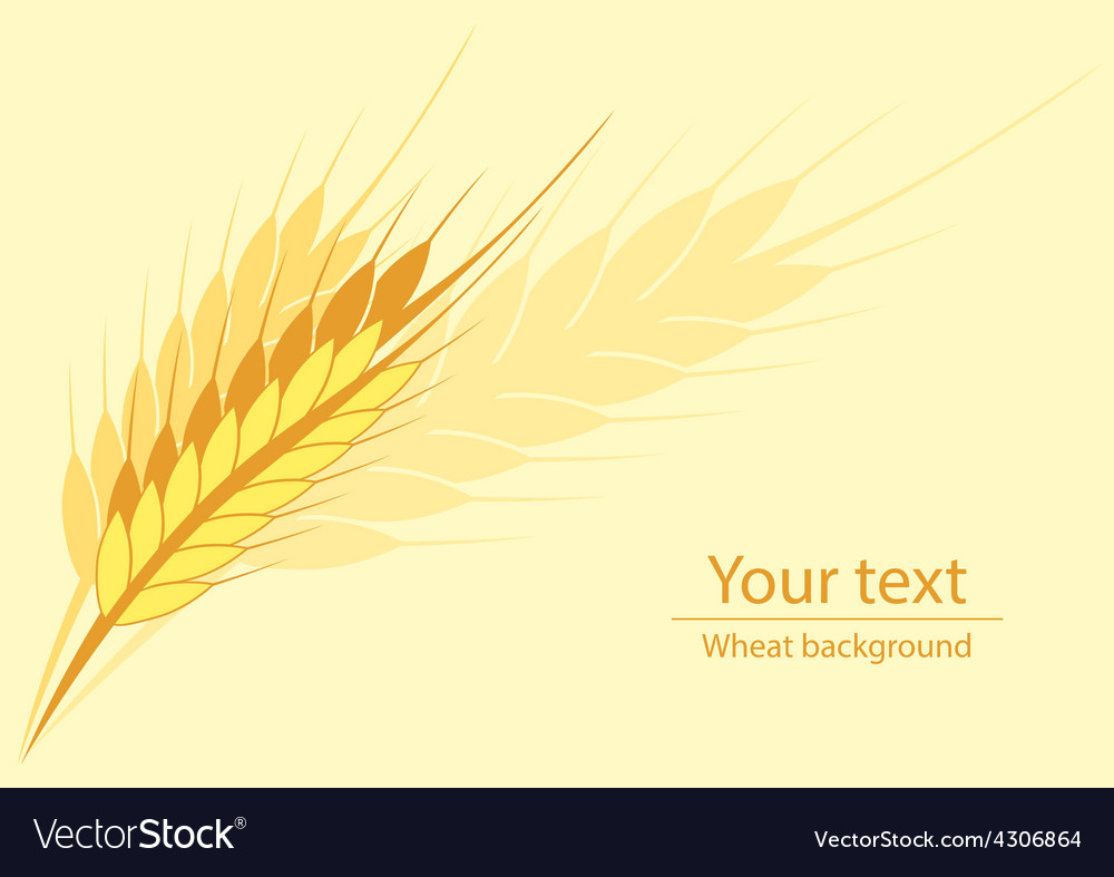 Wheat horyzontal background vector | Price: 1 Credit (USD $1)