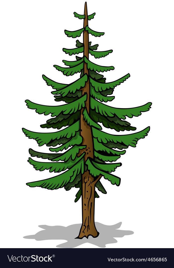 Coniferous tree vector | Price: 1 Credit (USD $1)