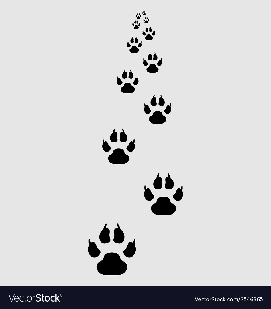 Footprints of dogs vector | Price: 1 Credit (USD $1)
