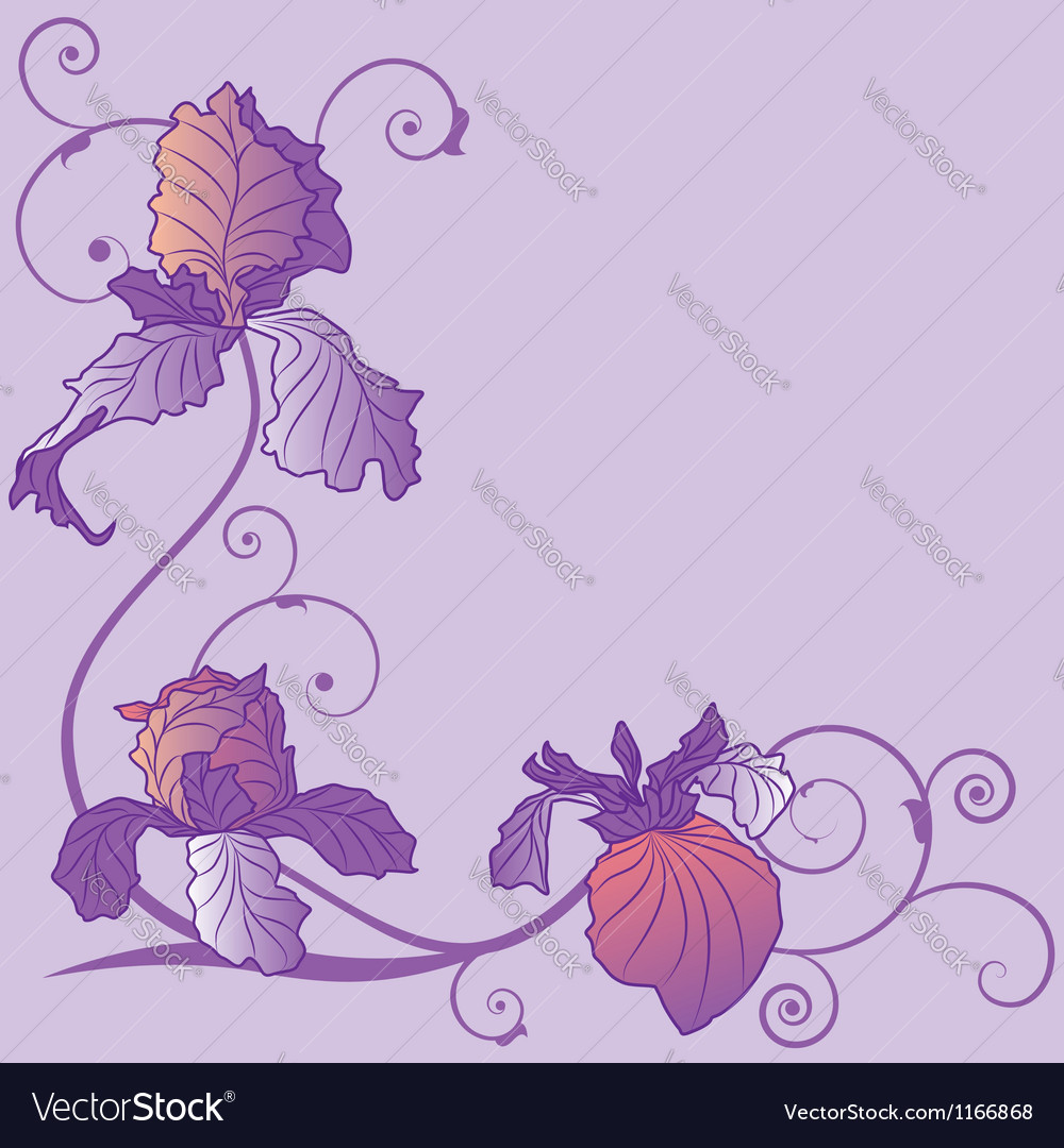 Irises vector | Price: 1 Credit (USD $1)