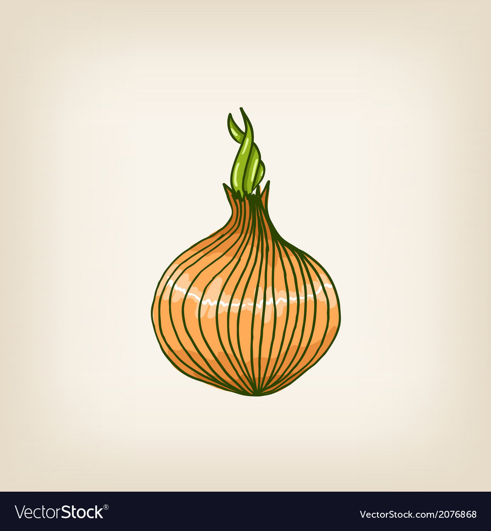 Shiny hand drawn onion vector | Price: 1 Credit (USD $1)