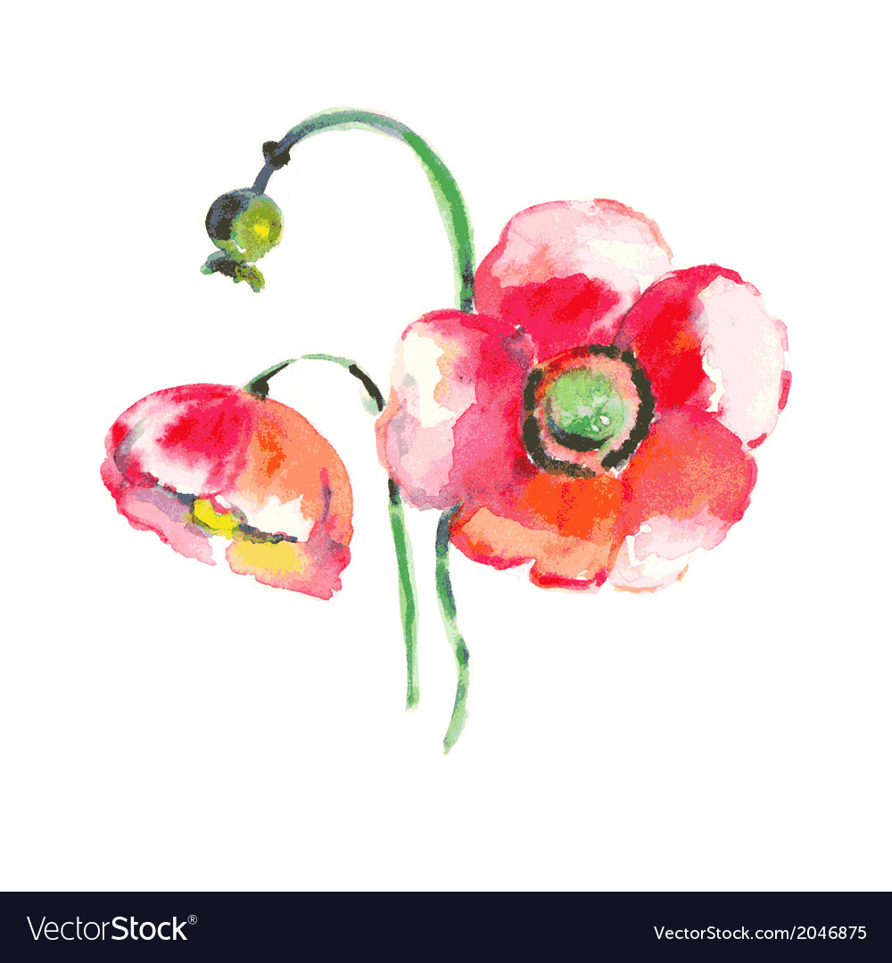 Watercolor poppy flower vector | Price: 1 Credit (USD $1)