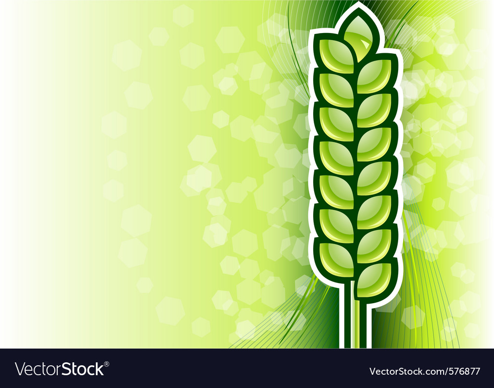 Green corn on the background vector | Price: 1 Credit (USD $1)