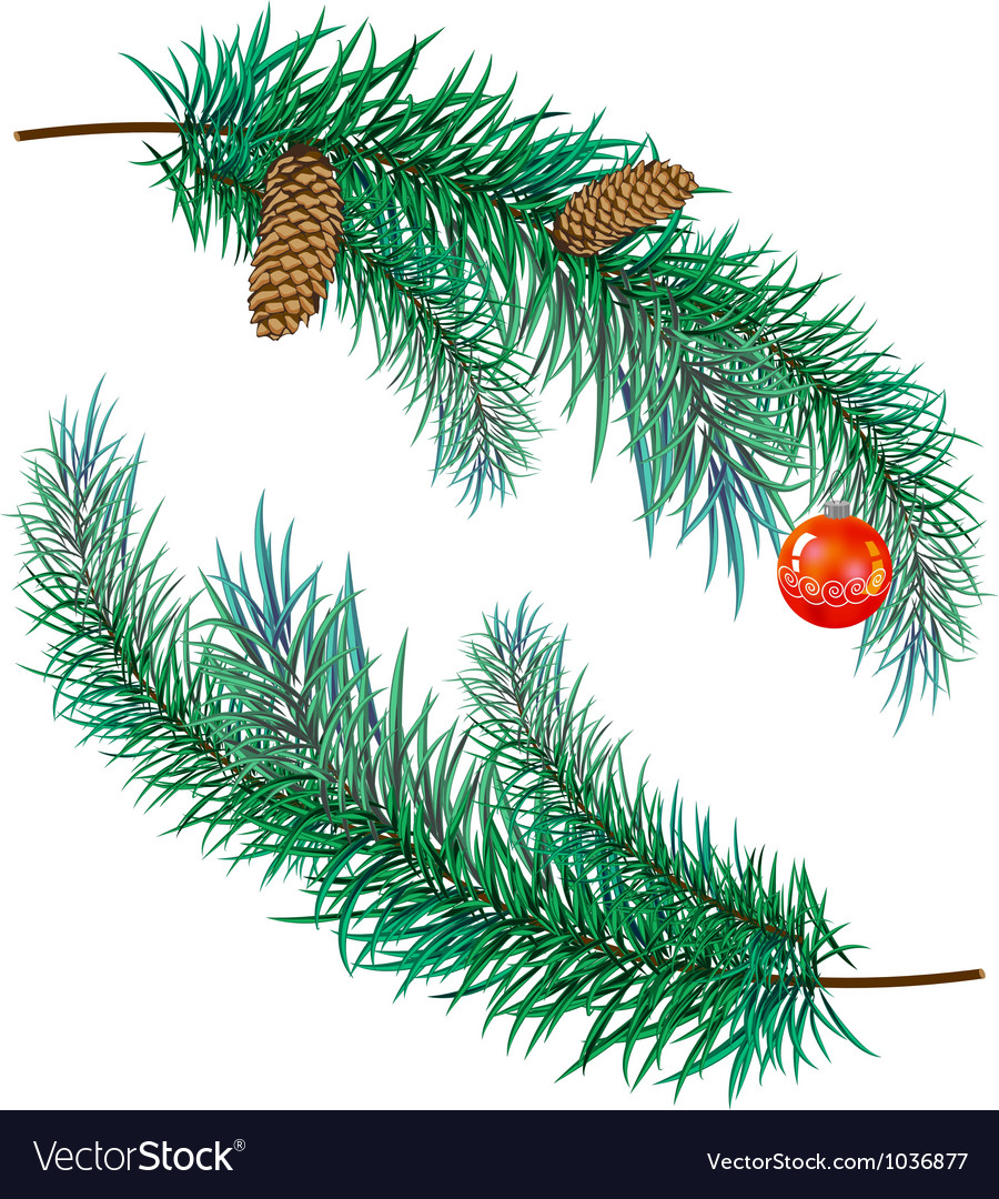 Pine branch with cones and toy vector | Price: 1 Credit (USD $1)