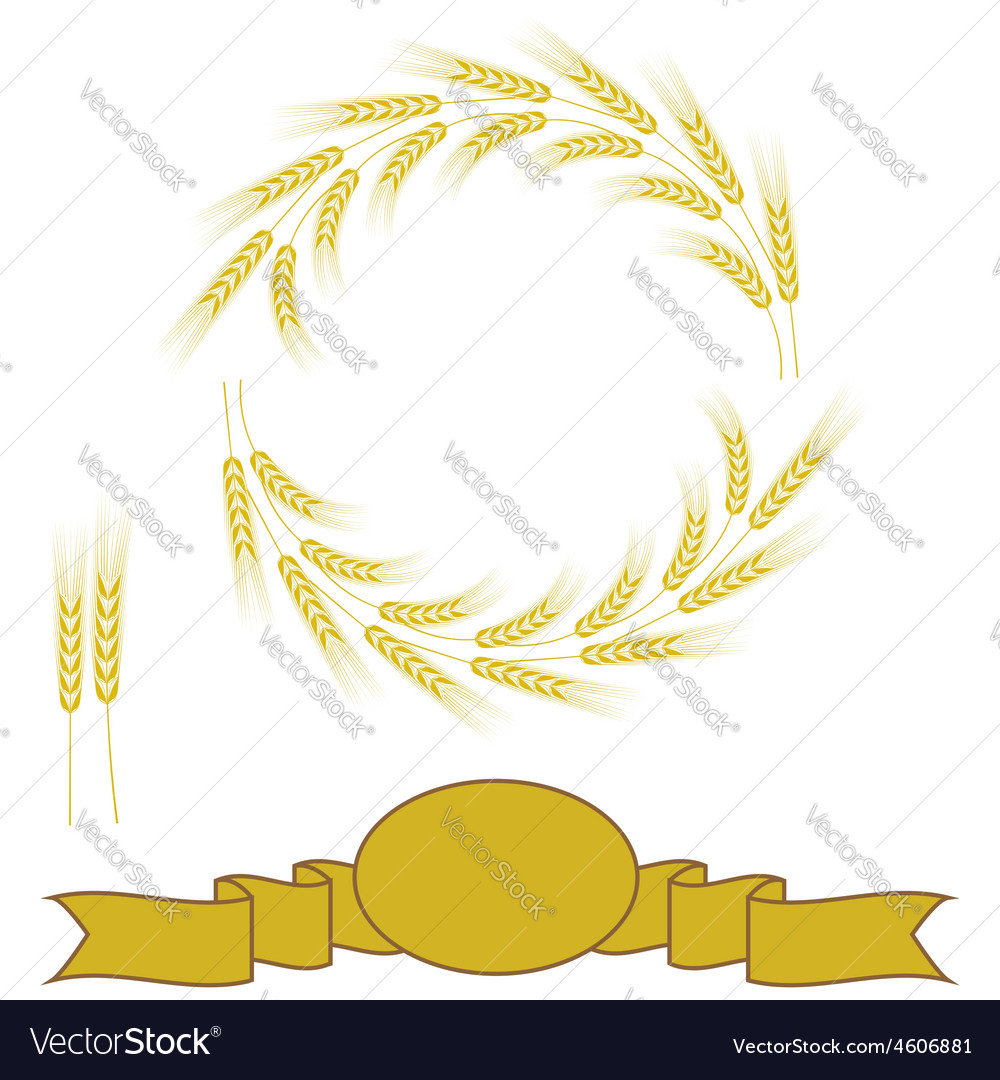 Yellow wheats vector | Price: 1 Credit (USD $1)