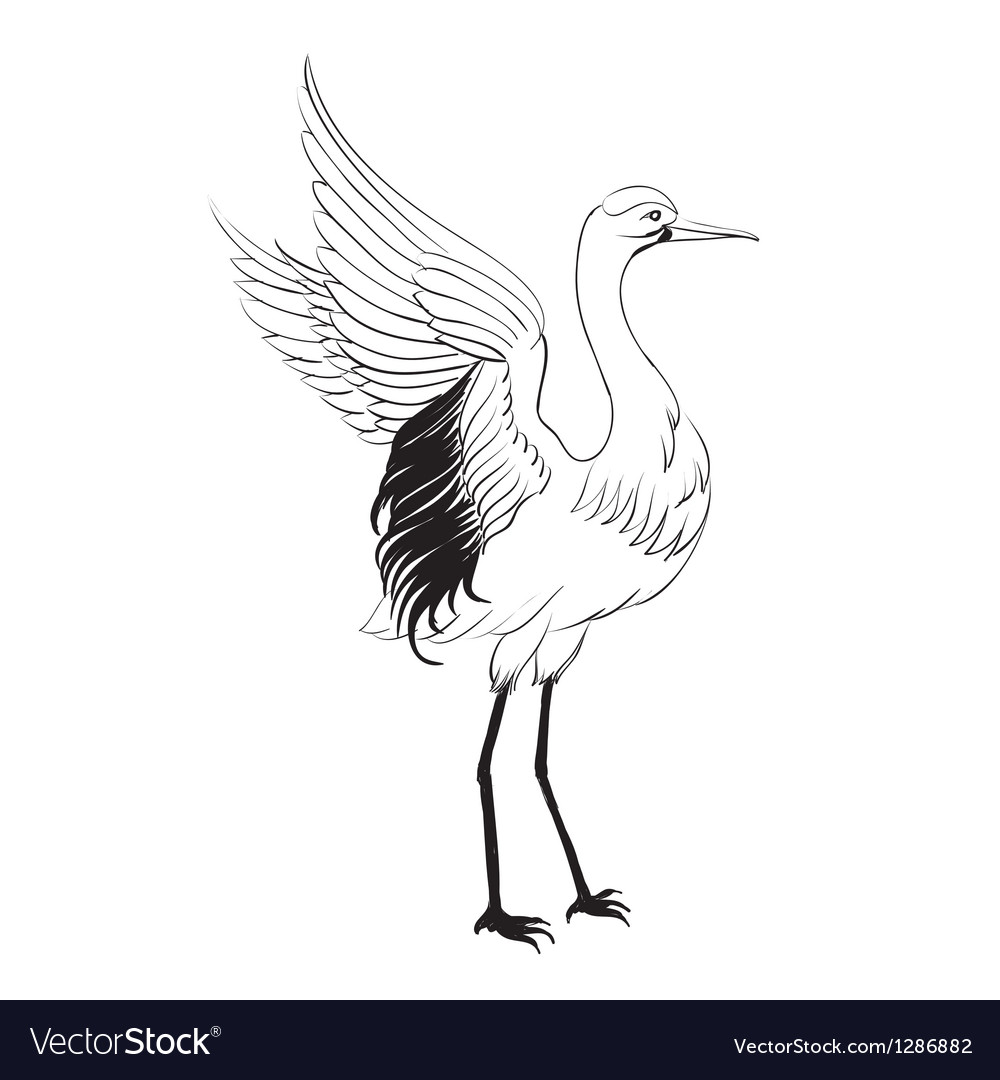 Heron isolated over white vector | Price: 1 Credit (USD $1)