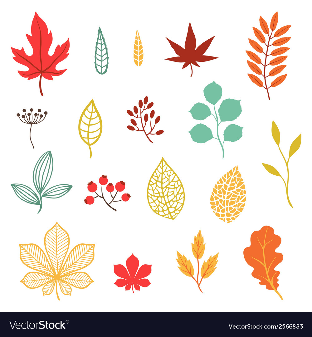 Set of various stylized autumn leaves and elements vector | Price: 1 Credit (USD $1)