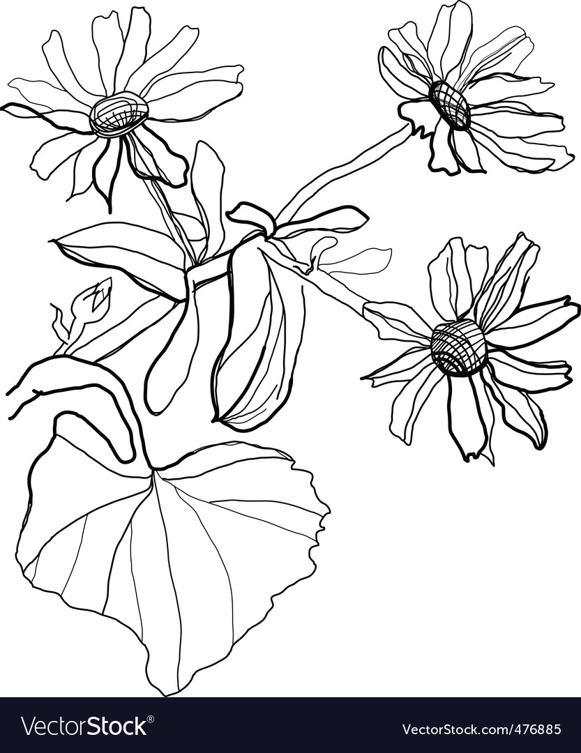 Drawing chamomile vector | Price: 1 Credit (USD $1)
