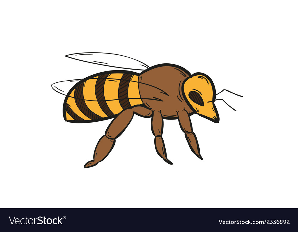 One bee vector | Price: 1 Credit (USD $1)