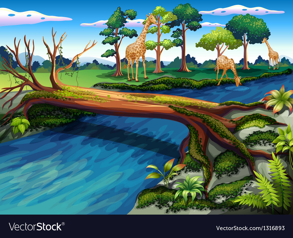 A flowing river at the forest vector | Price: 1 Credit (USD $1)