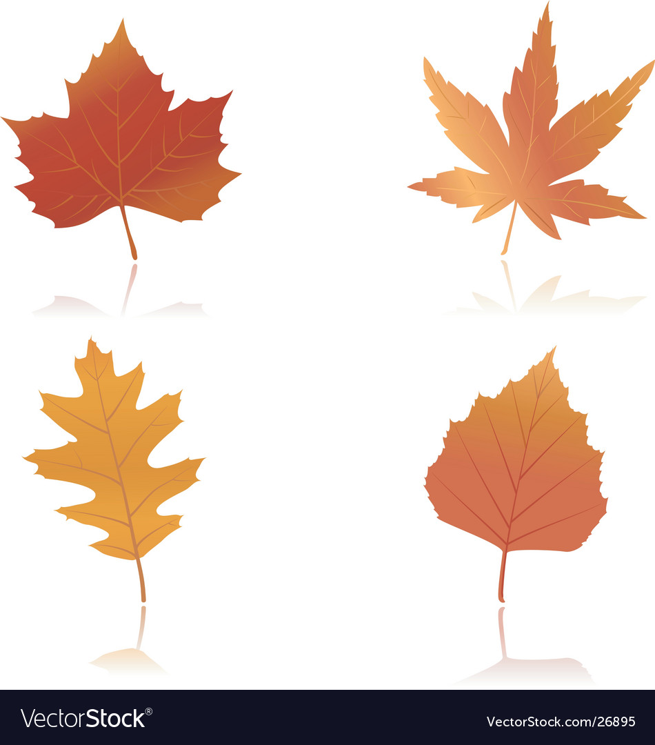 Vibrantly colored autumn leaves vector | Price:  Credit (USD $)