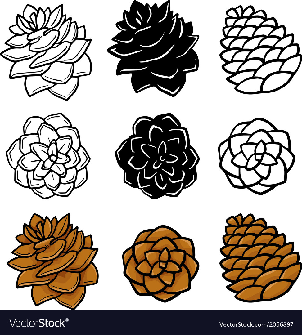 Set wit pinecones vector | Price: 1 Credit (USD $1)