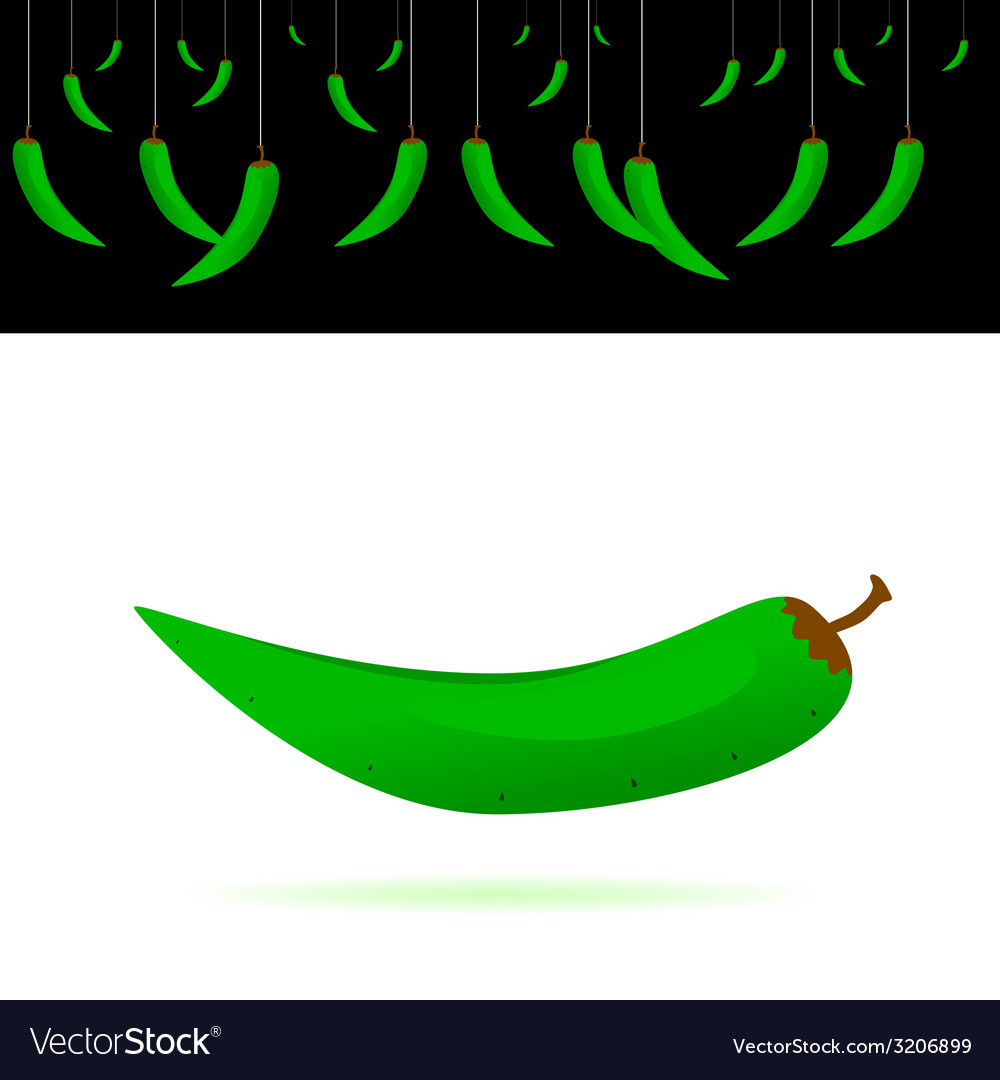 Green chillies vector | Price: 1 Credit (USD $1)