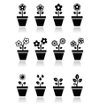 Flower plant in pot icons set vector