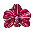Exotic orchid painted in red colors vector