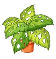 A plant and a pot vector