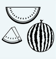 Whole and slices of watermelon vector