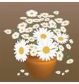 A beautiful bouquet of daisies vector