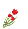 Red tulips vector