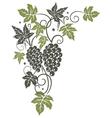 Vine leaves grapes vector