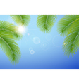 Sunny blue sky and palm branches vector