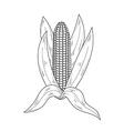 Sketch corn vector