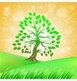 Summer green tree vector
