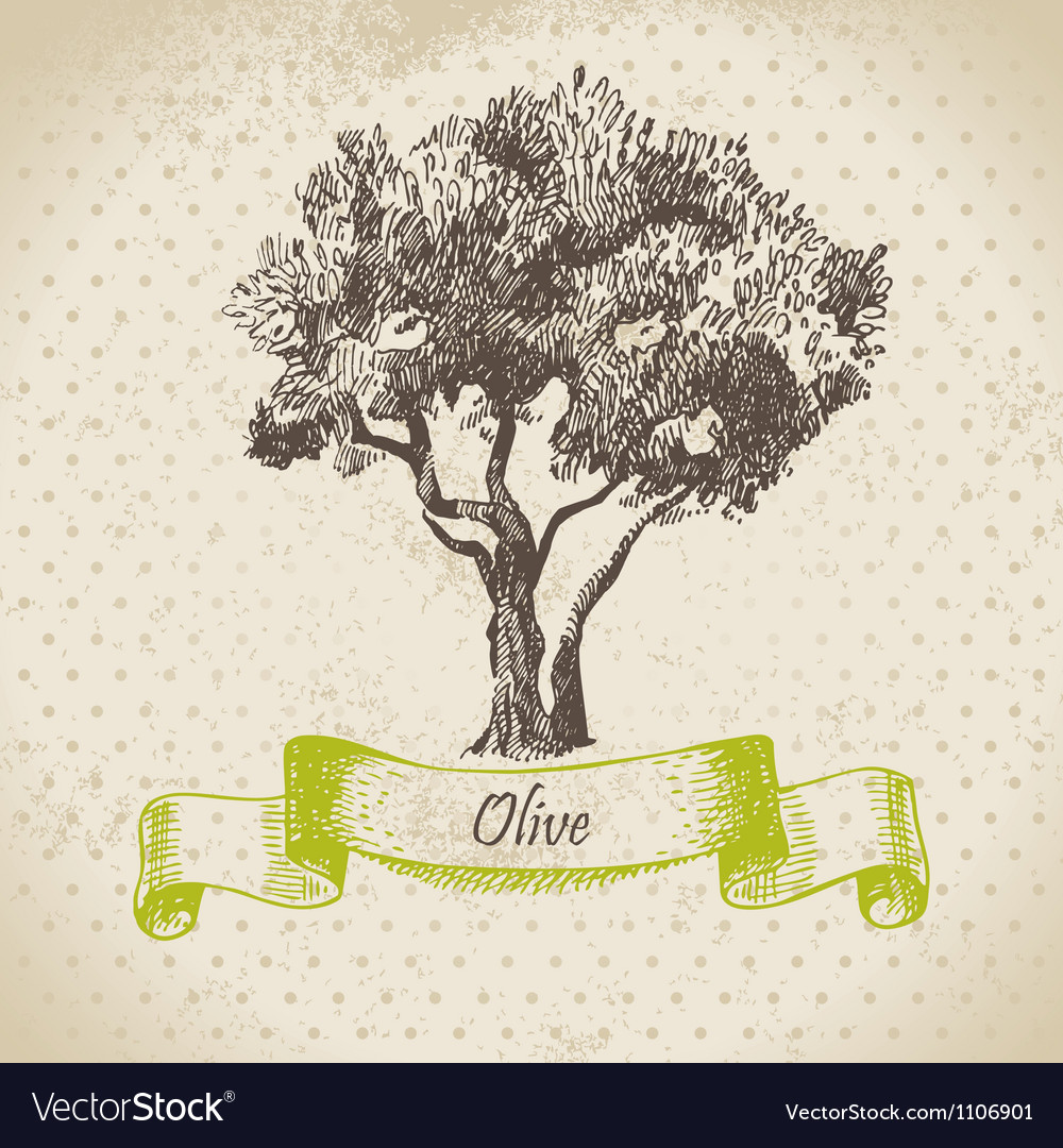 Olive tree hand drawn vector | Price: 1 Credit (USD $1)