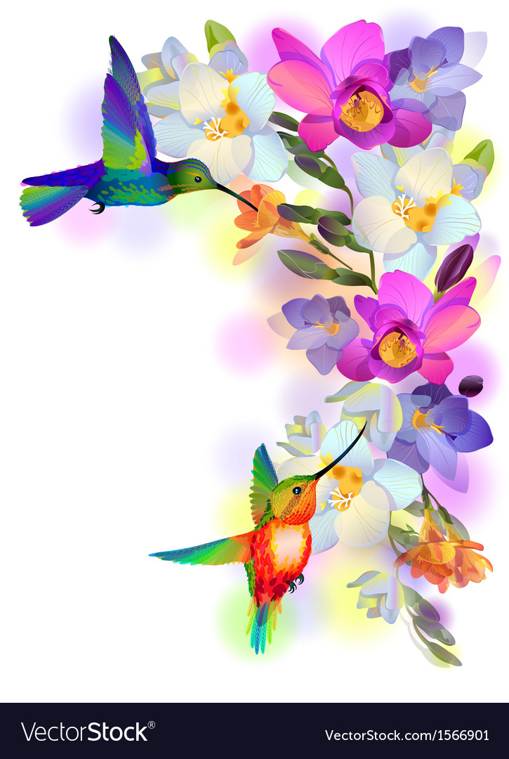 Rainbow humming-birds with freesia flowers vector | Price: 1 Credit (USD $1)