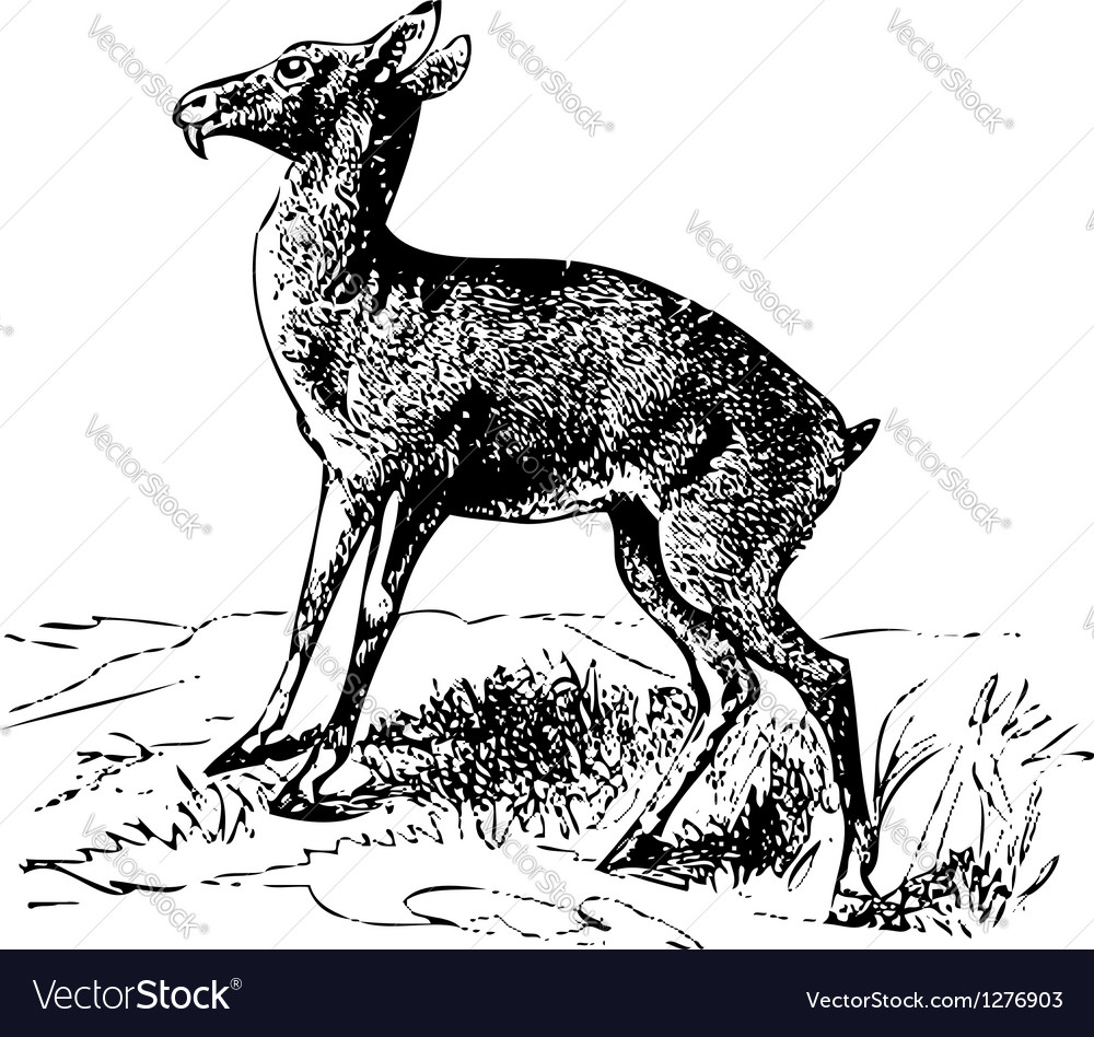 Siberian musk deer engraving vector | Price: 1 Credit (USD $1)