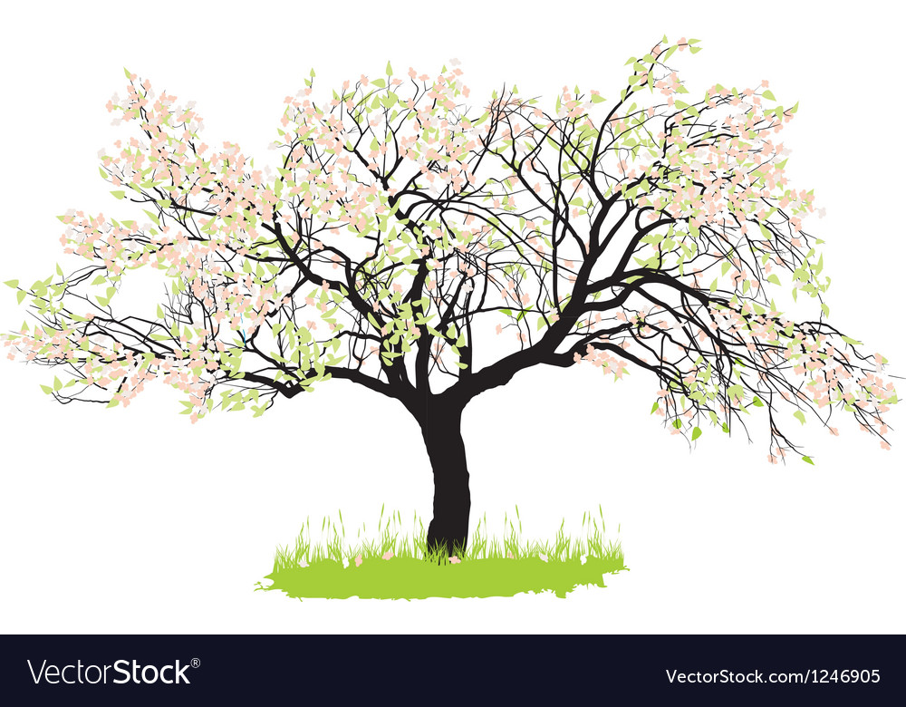 Apple tree in spring vector | Price: 1 Credit (USD $1)
