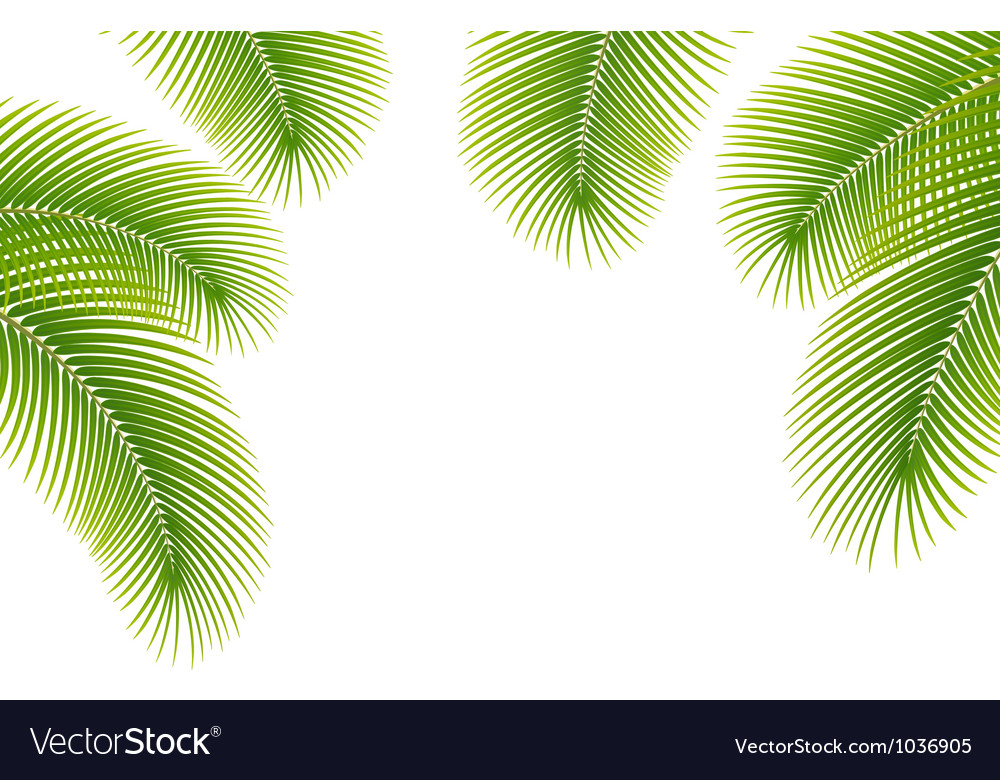 Leaves of palm tree on white background vector | Price: 1 Credit (USD $1)