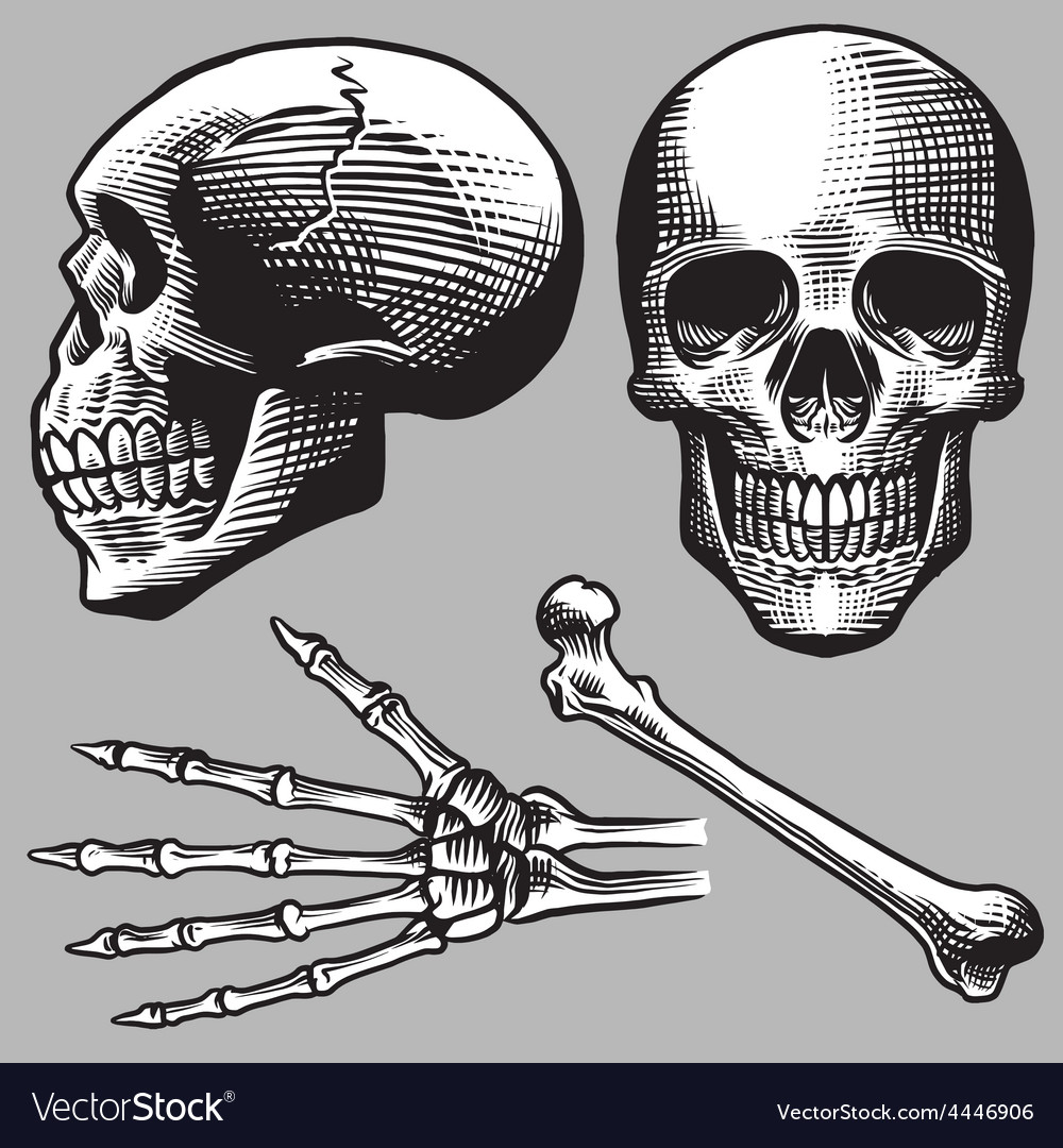 Hand drawn human skull set vector | Price: 1 Credit (USD $1)