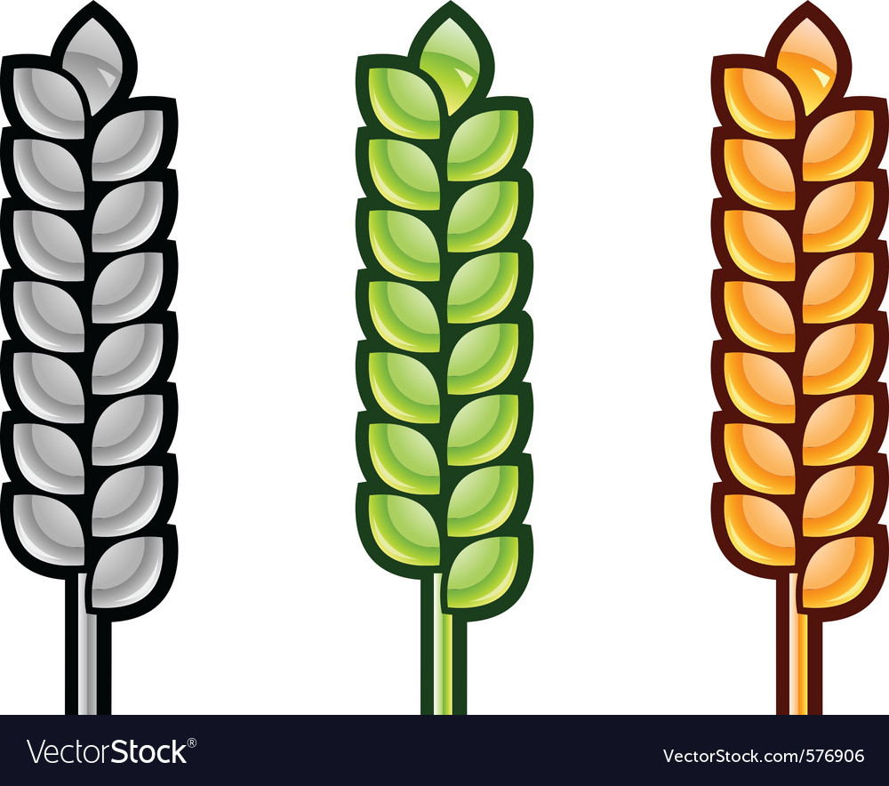 Three color corn isolated on the white vector | Price: 1 Credit (USD $1)