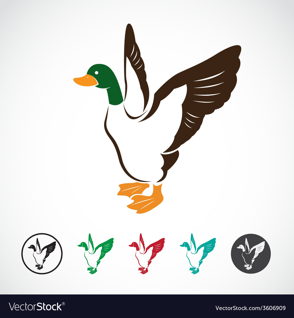 Image of an wild duck vector | Price: 1 Credit (USD $1)