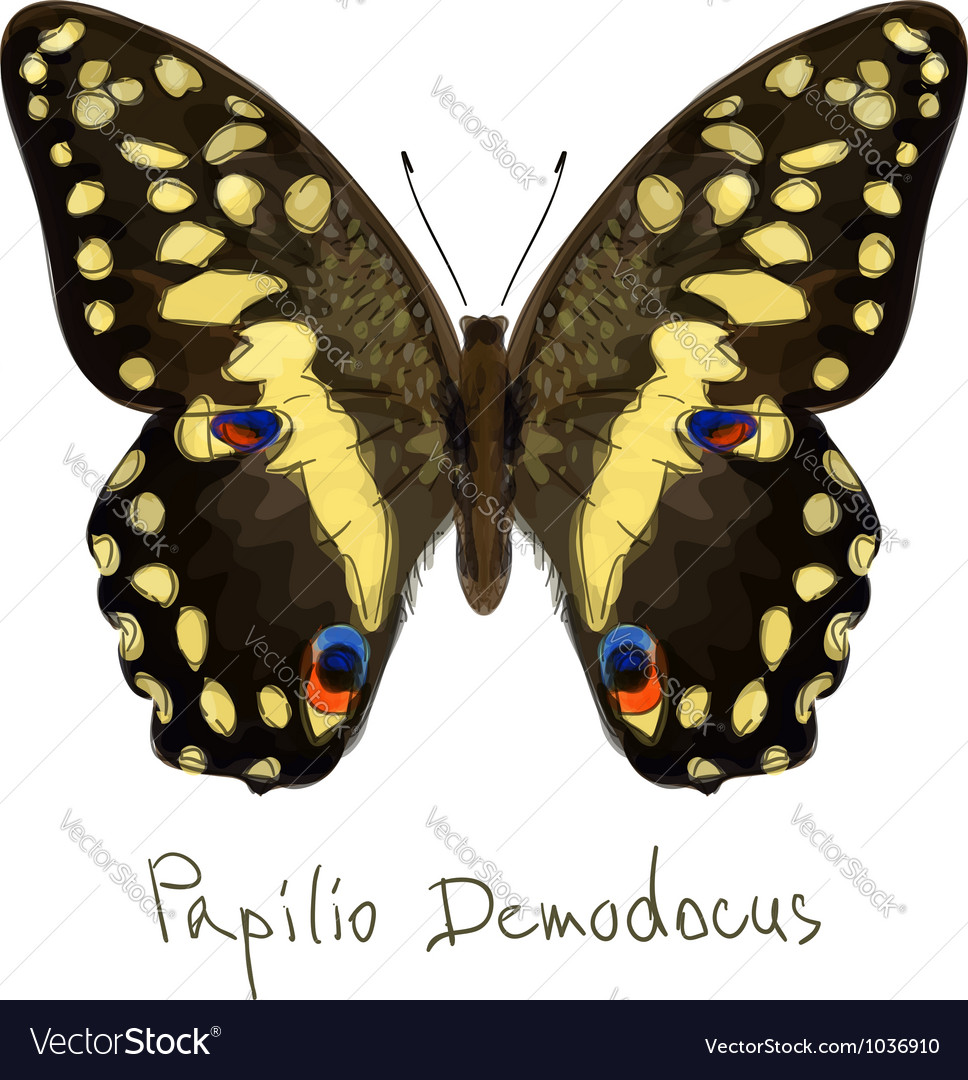 Butterfly papilio demodocus watercolor imitation vector | Price: 1 Credit (USD $1)