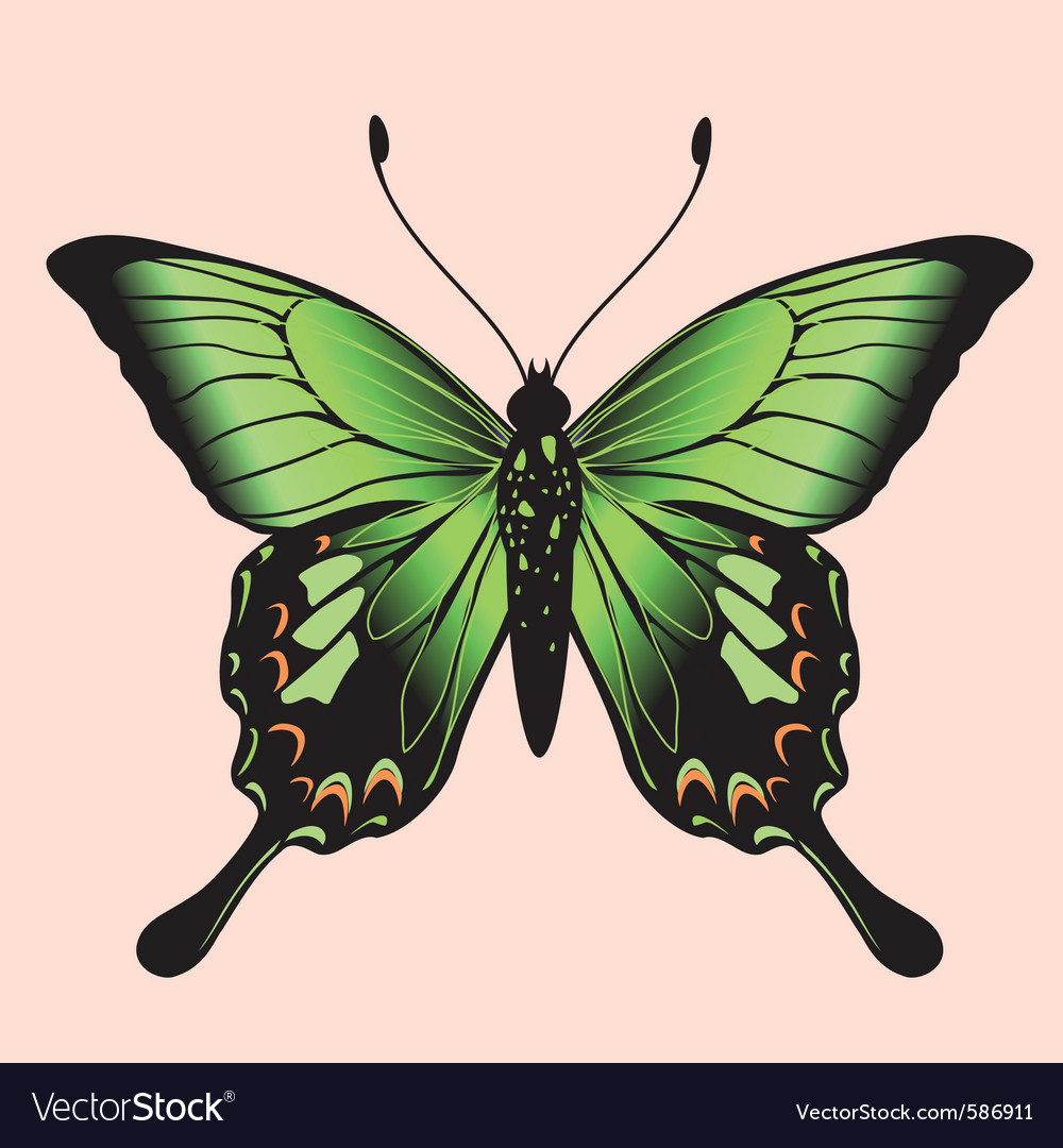 Coloured butterfly vector | Price: 1 Credit (USD $1)