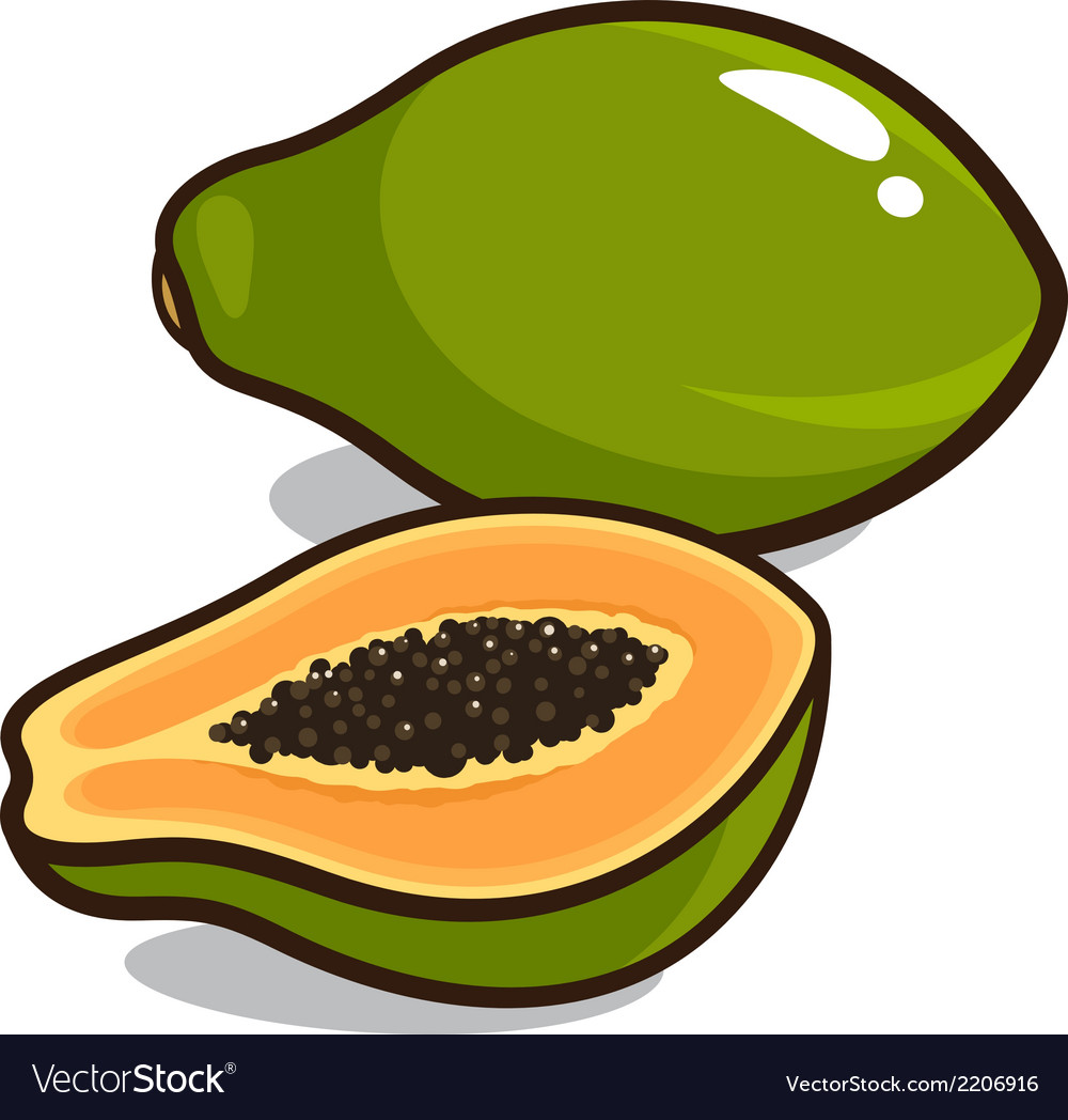Papaya vector | Price: 1 Credit (USD $1)