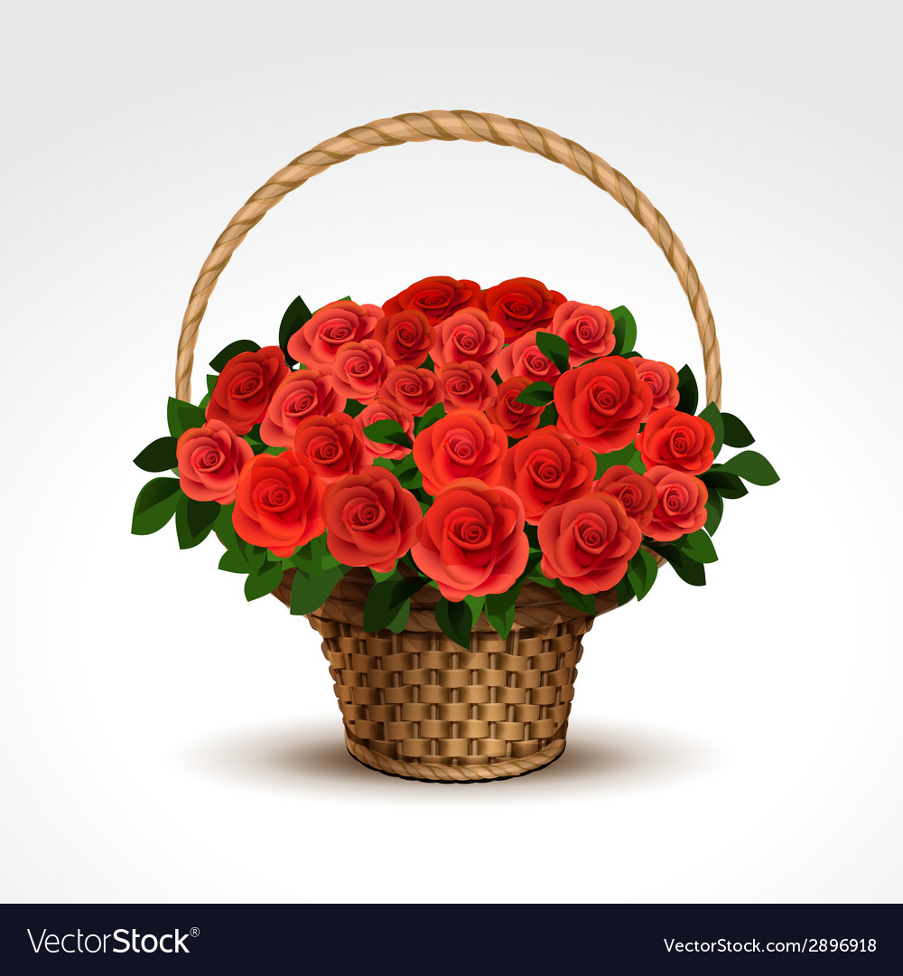 Basket of red roses isolated vector | Price: 1 Credit (USD $1)