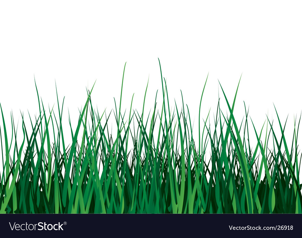 Green grass on white background vector | Price: 1 Credit (USD $1)