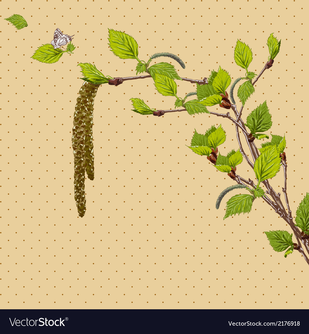 Vintage card with birch twigs vector   Price: 1 Credit (USD $1)
