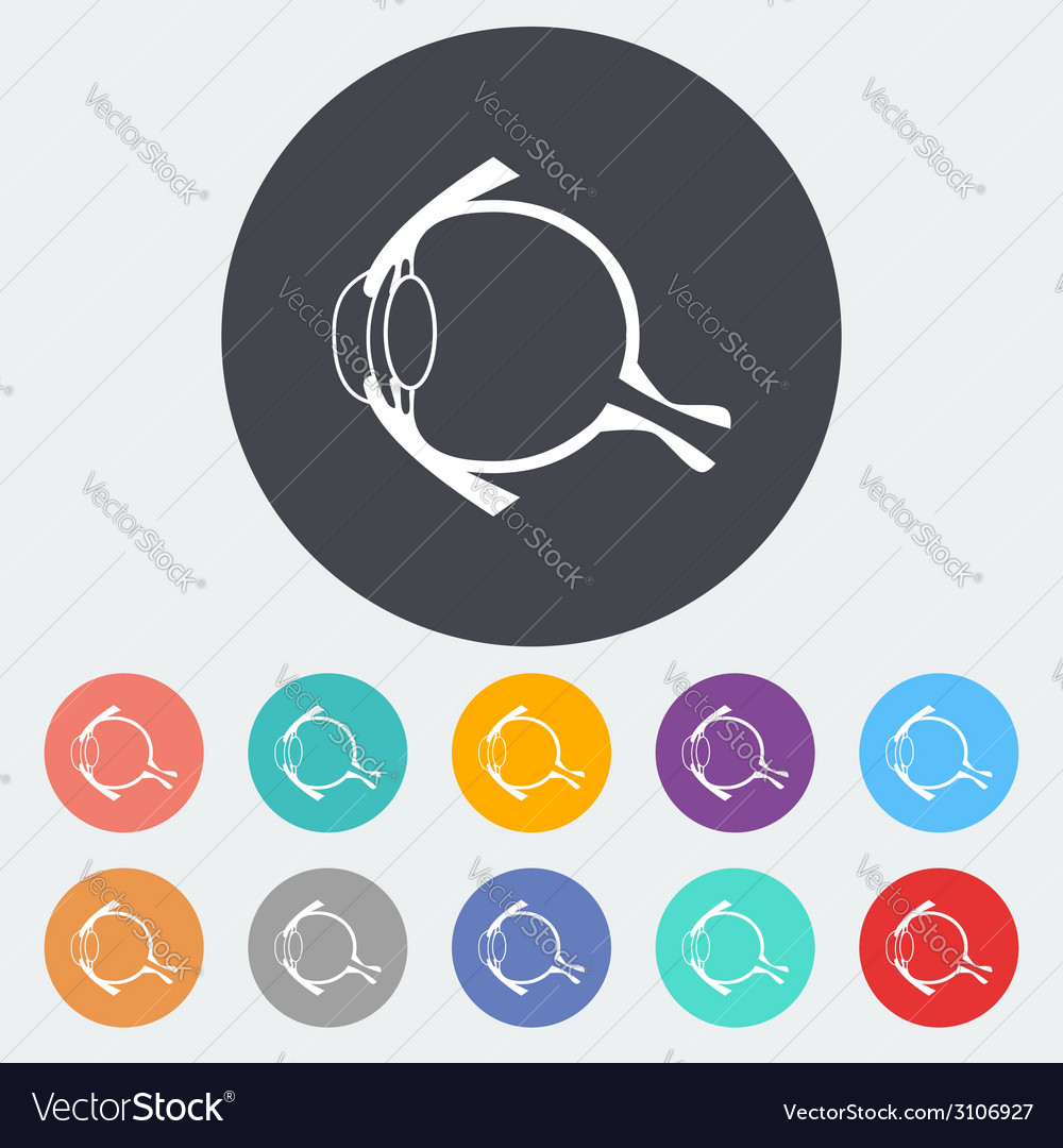 Anatomy eye vector | Price: 1 Credit (USD $1)