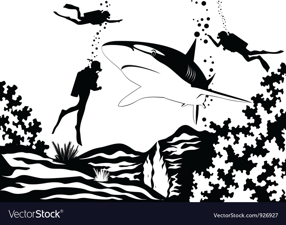 Scuba divers and shark vector | Price: 1 Credit (USD $1)