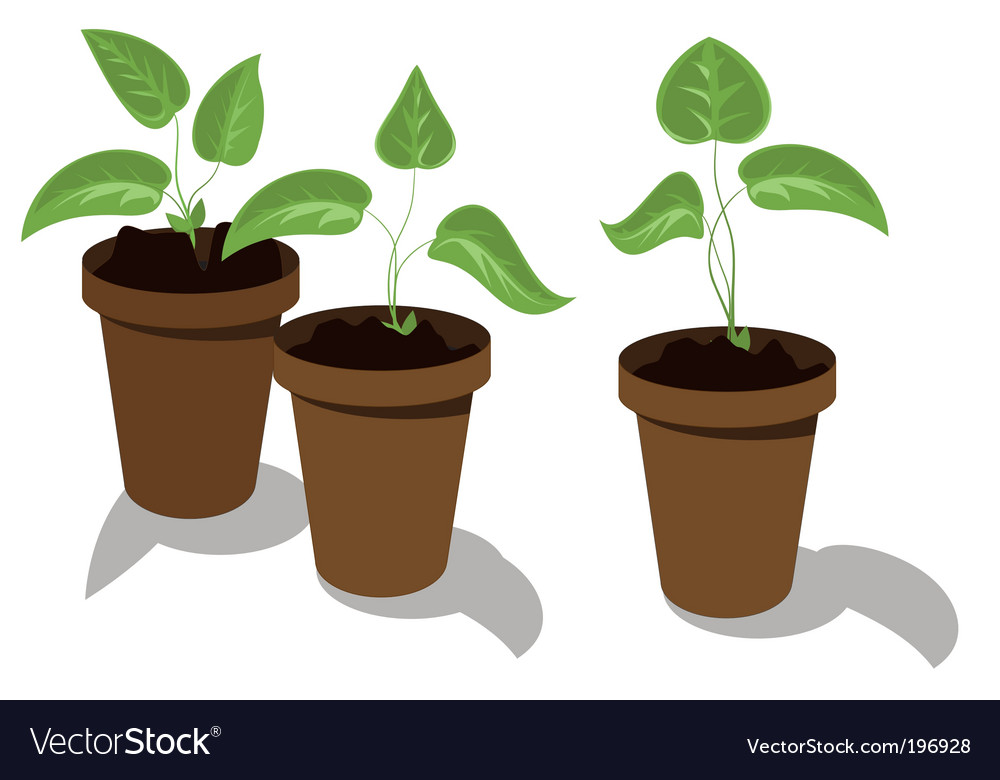 Flower seedlings vector | Price: 1 Credit (USD $1)