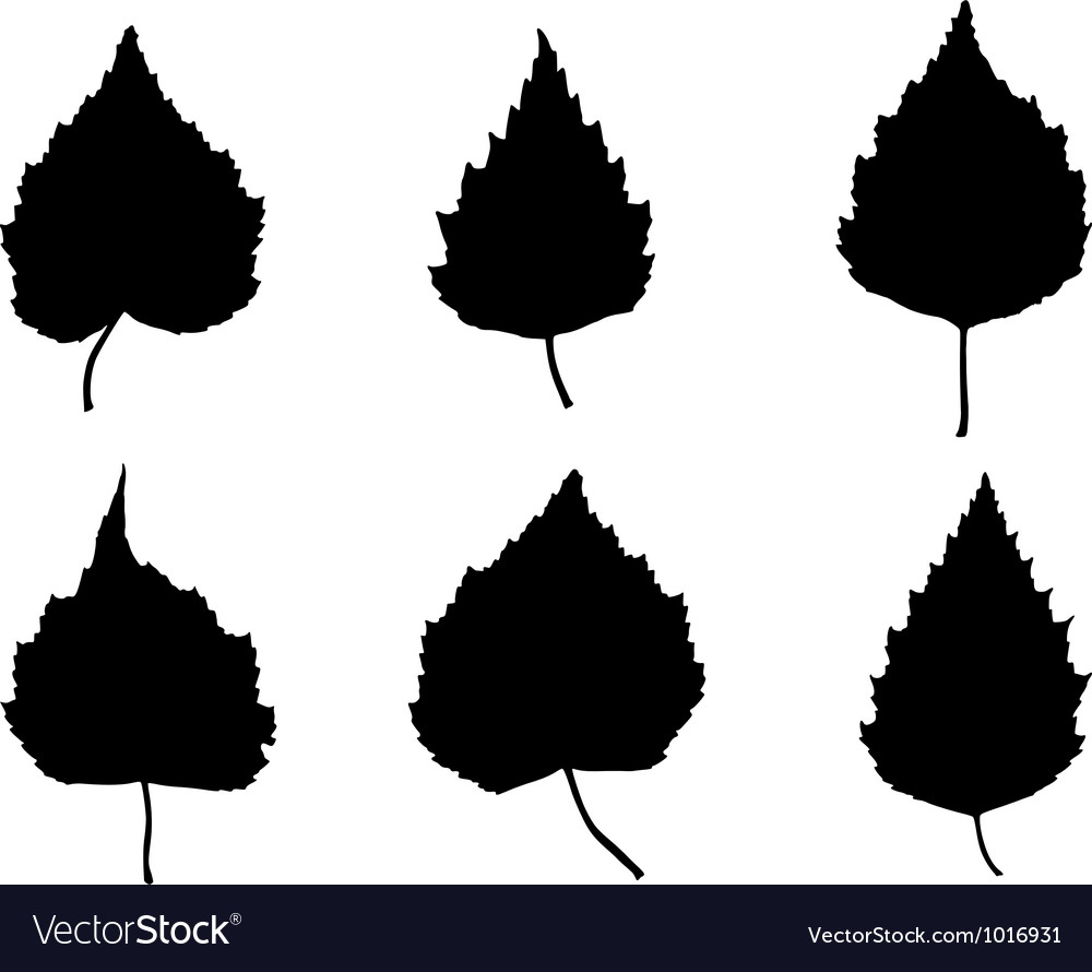 Birch leaves vector | Price: 1 Credit (USD $1)