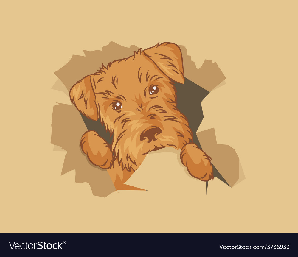 Puppy in the box vector | Price: 1 Credit (USD $1)