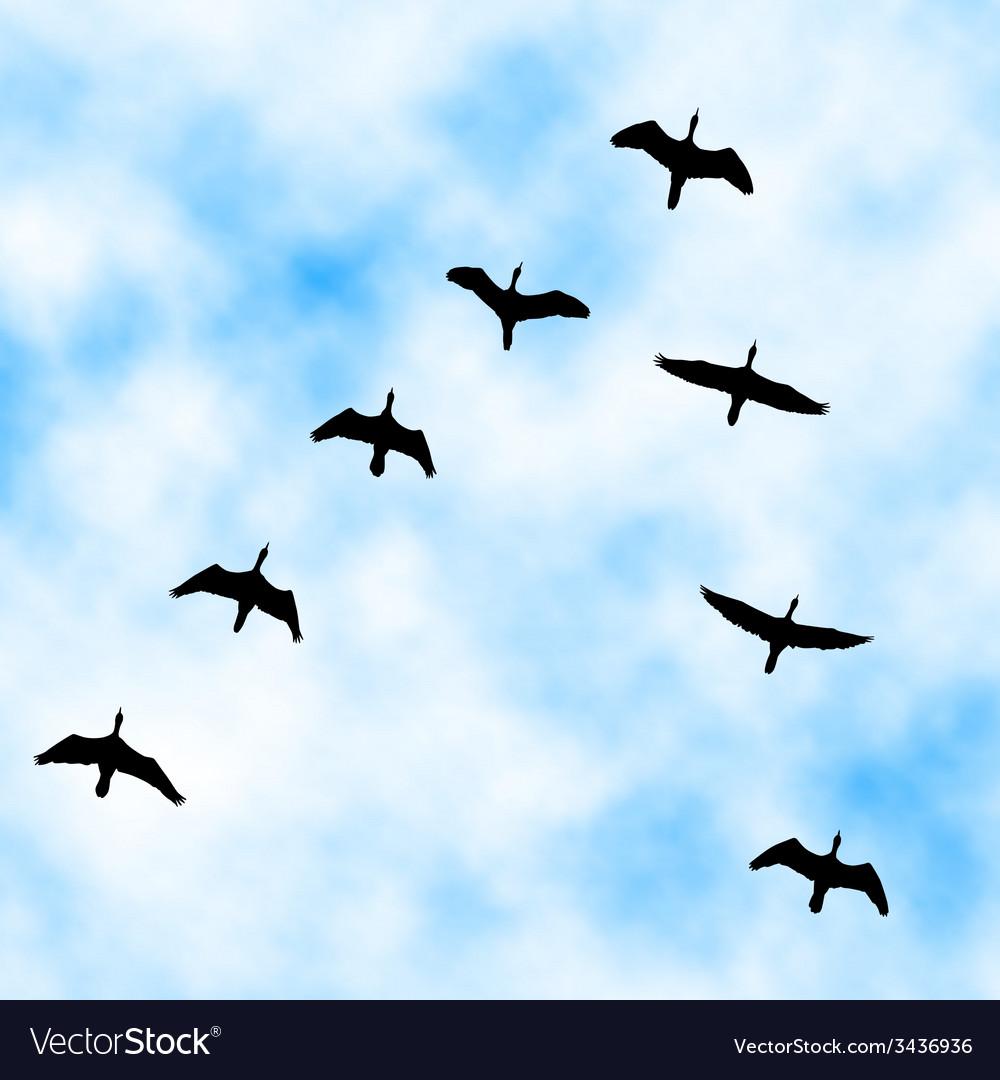 Cormorant flyover vector | Price: 1 Credit (USD $1)