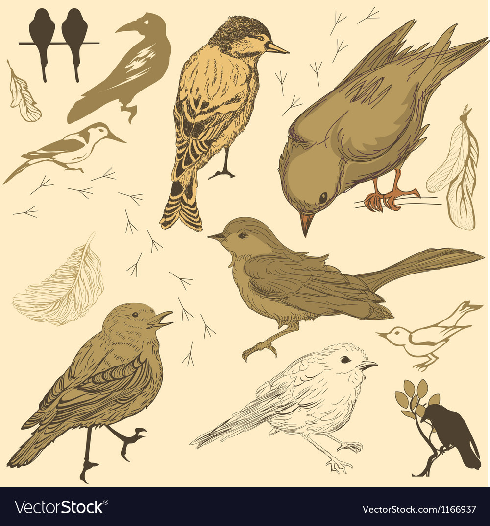 Set of handdrawn birds vector | Price: 1 Credit (USD $1)