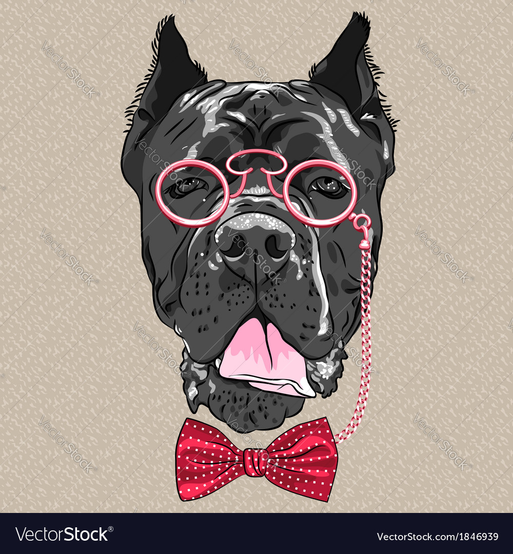 Hipster dog cane corso breed vector | Price: 1 Credit (USD $1)