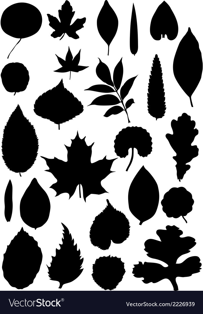 Leaf silhouette collection vector | Price: 1 Credit (USD $1)
